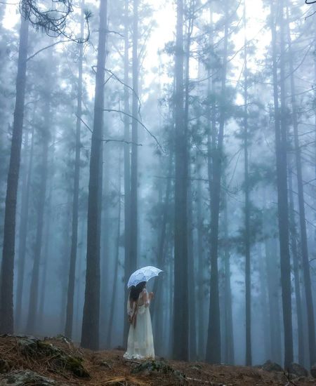 Woman Holding Umbrella While Standing In Forest During Foggy Weather