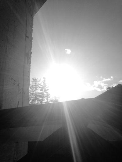 Caught the light EyeEm Nature Lover Black & White Eye4photography  Sunny Sunday