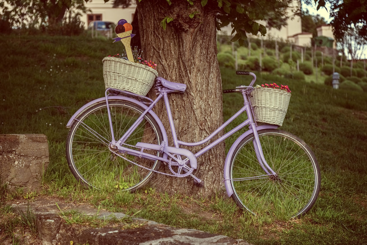 bicycle, transportation, tree, bicycle basket, land vehicle, mode of transport, stationary, basket, outdoors, growth, day, grass, no people, nature, flower