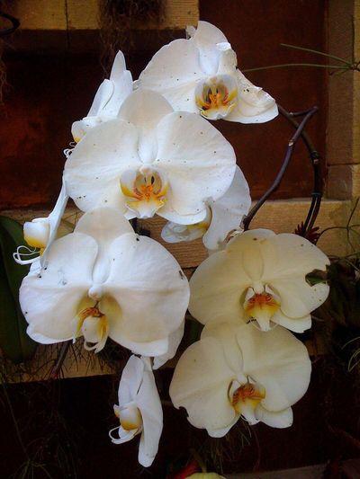 Orquídeas... Natureza Diadia Streatphotograpy Fabiomiquelino