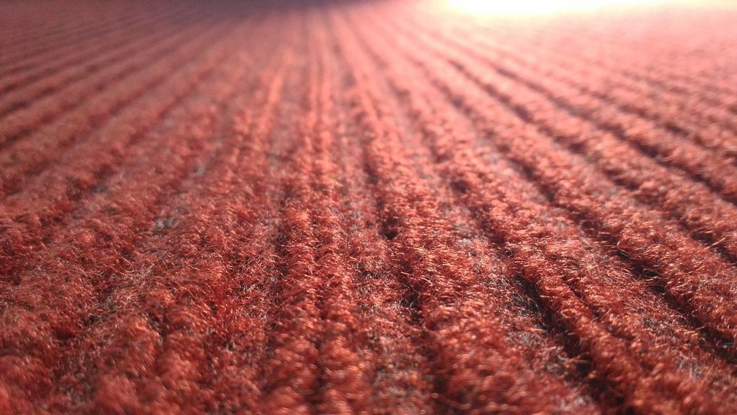 Red Red Color Red Carpet No People Growth Day Close-up Backgrounds Mat EyeEmBestPics Eyeemphotography EyeEm Gallery EyeEm EyeEm Simple & Clean Simple Simple Photography Simple Beauty Freshness EyeEm Best Shots Eyeem Different Common Indoorsphotography Millennial Pink Sommergefühle