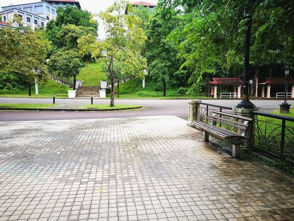 Tree Outdoors Day Green Color No People Nature Growth Sky Kota Kinabalu,Sabah Malaysia