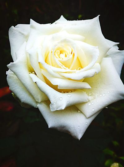 Nature's sense of purity, simplicity and beauty ^_^