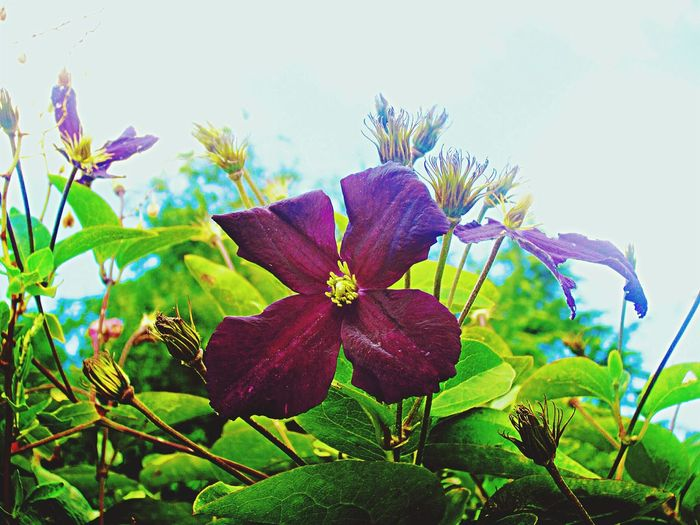 Nature EyeEm Nature Lover Flower Purple
