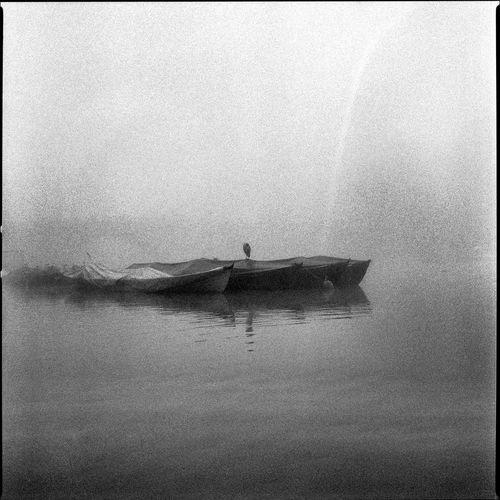 Bird Blackandwhite Boat Calm Mist Rainbow River Senery Silence