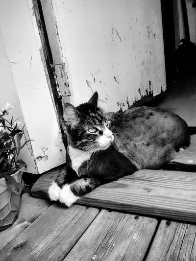 Chilling Relaxing Enjoy The Summer Catoftheday Cat Blackandwhite Photography