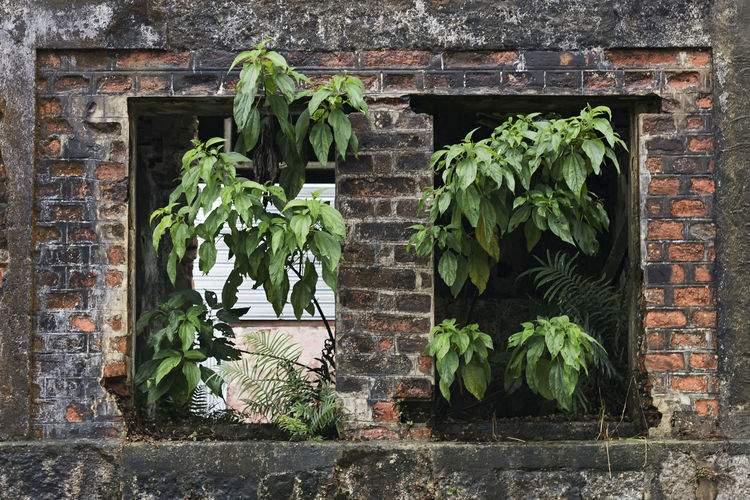 Abandoned House Plant Wall Brick Wall Growth Leaf Nature Building Exterior House Concept Conceptual Abandoned Abandoned House Forgotten Places  Deterioration Windows Built Structure Abandonment No People Building Architecture Brick Wall - Building Feature Old Old House Neglected