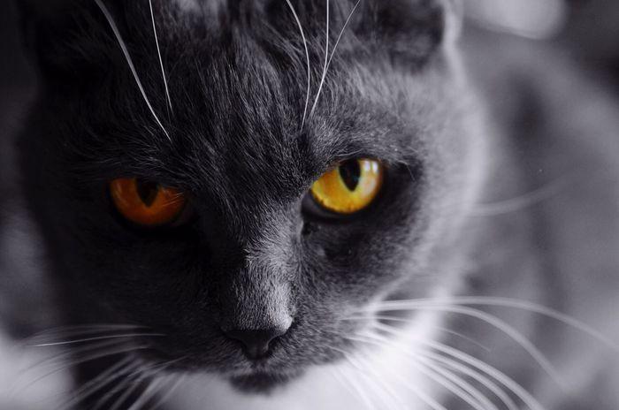 Chat Eyes Félin  Regard Nikon Nikonphotography Animals Cat Nikon D7000 Regards *~* Animal Themes One Animal Tamron Sp 15-30mm F/2.8 Bruxelles Belgium