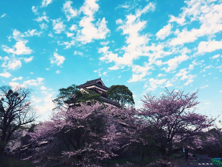 Cherry Blossoms Tree Sky Cloud - Sky No People History Castle Kumamoto Day Outdoors Nature Flower Eyem Best Shots Mobilephotography VSCO