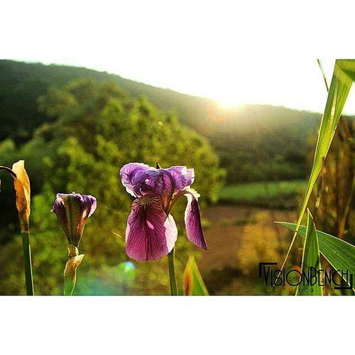 Flower Vscofoto Vscocam