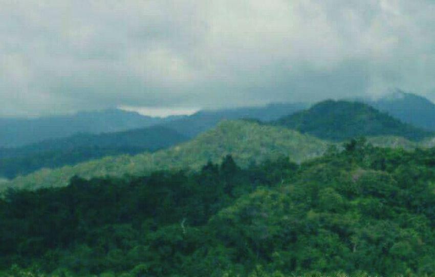 Mint By Motorola Mountain_collection Mountaindew  Nice Palawan