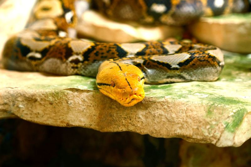 Details Nature_collection Nature Traveling Travel Photography Copy Space Details Of Nature Details Summertime Close-up Snake Animal Scale Animal Skin
