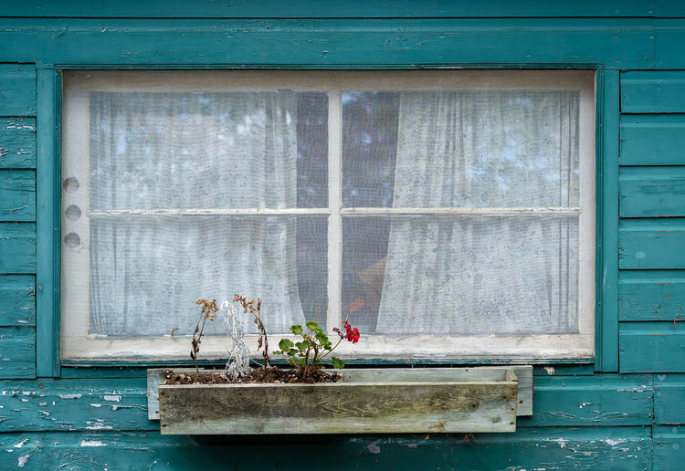 Red Architecture Blue Blue Sky Building Exterior Built Structure Cabin Close-up Cottage Curtains Day Flower Fragility House Lace Nature No People Old Outdoors Summer Window Window Box Window Sill Shades Of Winter