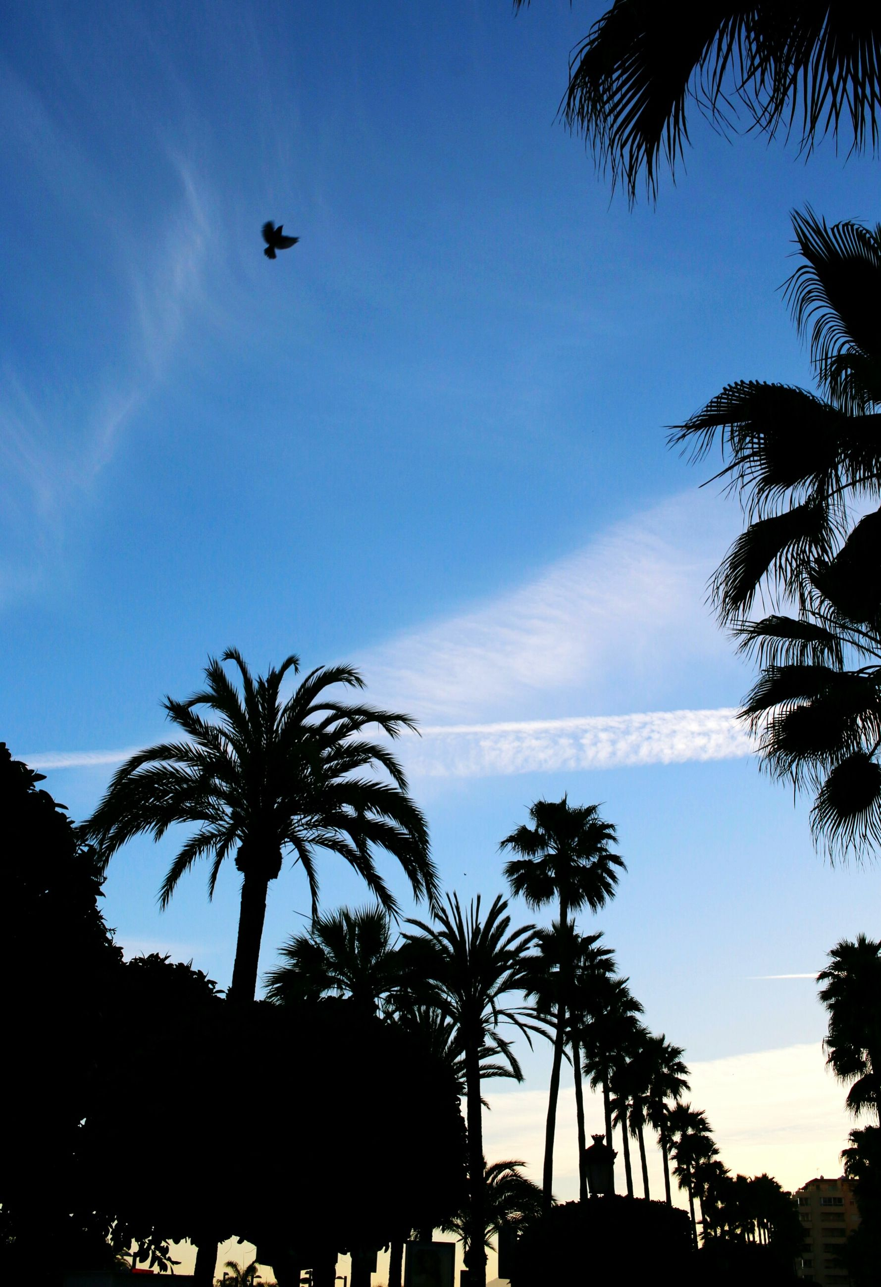 palm tree, tree, silhouette, sky, blue, sea, tranquility, scenics, tranquil scene, beauty in nature, nature, low angle view, flying, transportation, beach, horizon over water, mode of transport, growth, coconut palm tree, outdoors