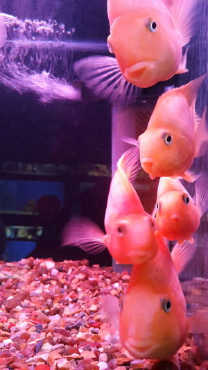 Colours Team Fish fish
