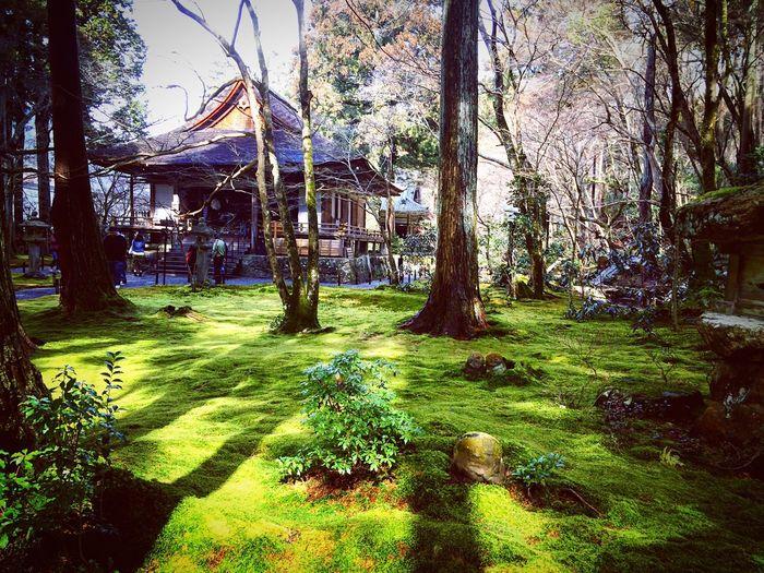 三千院 大原 京都 Kyoto Beauty In Nature Green Color 3XSPUnity Travel Destinations Japanese Garden Kyoto Garden Kyoto, Japan Hello World Enjoying Life Relaxing