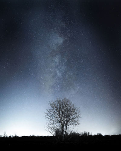 Silhouette trees on field against sky at night