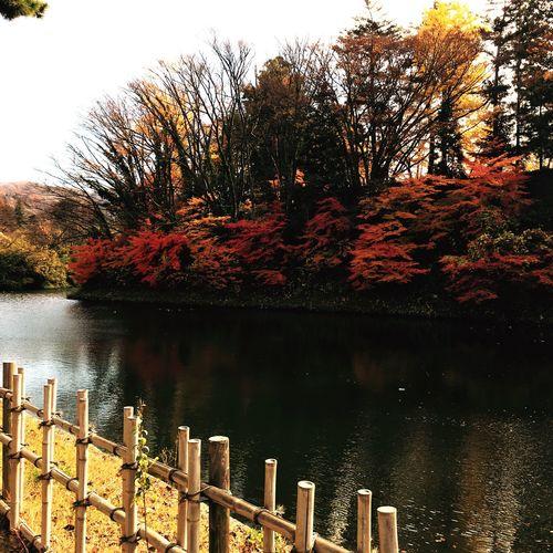Fall Beauty 鶴ヶ城 Aizuwakamatsu Castle in Japan