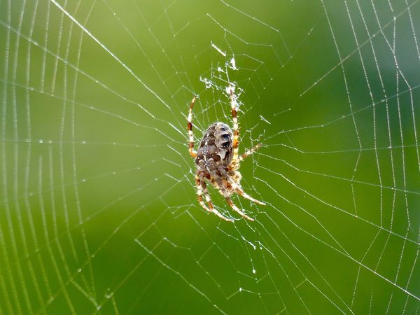 Spider Spider Web Animal Themes Survival Animals In The Wild Web One Animal Nature Animal Leg Close-up Insect Animal Wildlife Outdoors Fragility No People Day Complexity