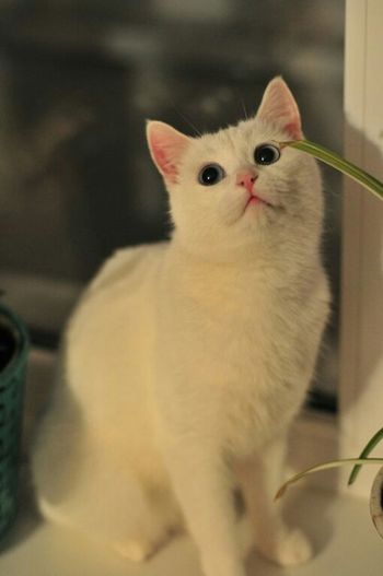 Pets, любимая кошечка?????