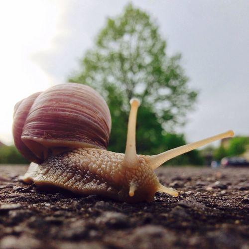Snail Animal