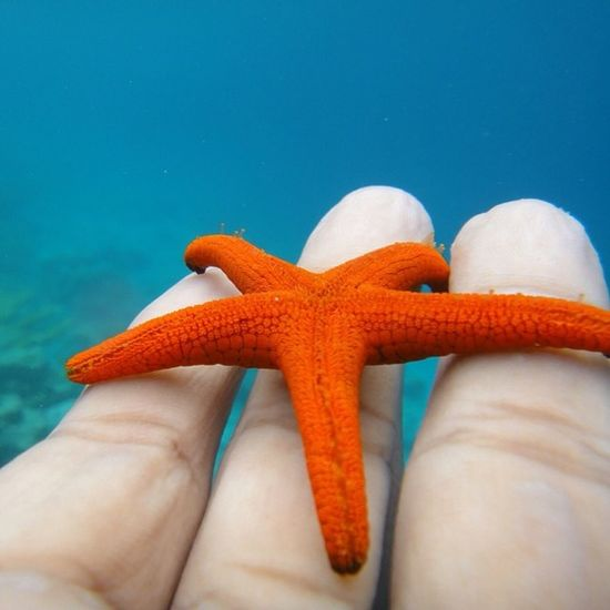 A Starfish  .. Snorkeling TBT  Addu Gan Maldives Underthesea Orange GoodTimes Throwbackthursday