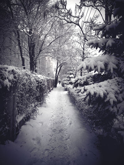 Tree Nature City Road Snow 下班路途風景 Night