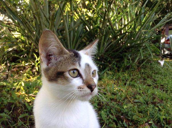 A pose Pose Posing Animal Themes Animal One Animal Mammal Pets Cat Looking Away Grass Nature