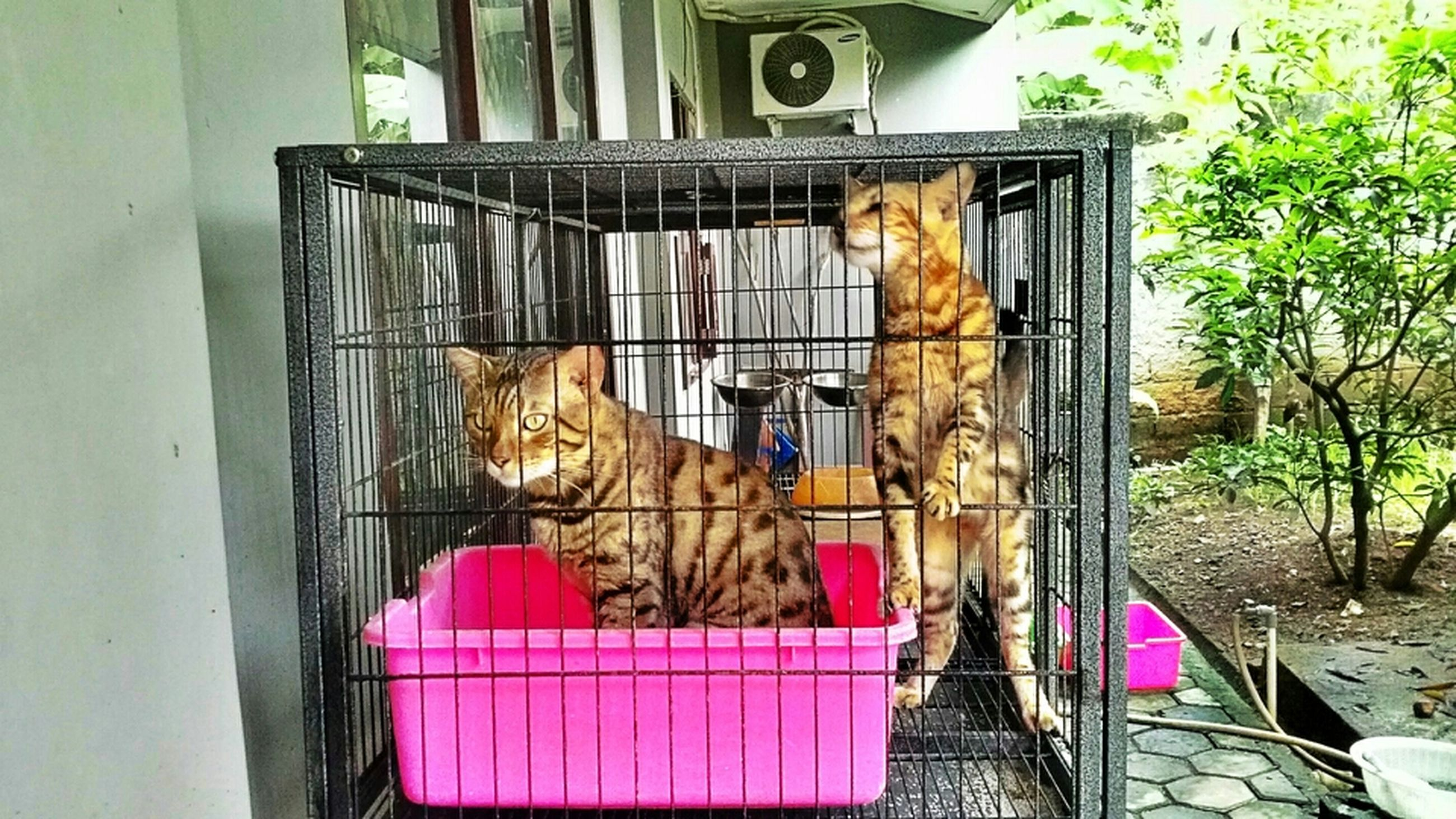 animal themes, domestic animals, mammal, pets, one animal, cage, built structure, architecture, building exterior, dog, window, house, relaxation, day, domestic cat, animals in captivity, livestock, resting, two animals, birdcage