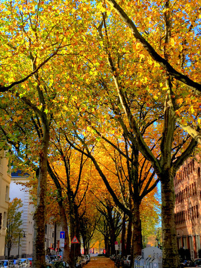 Autumn colors Showcase: November Autumn Colors Leaves Trees EyeEm Nature Lover Autumn Leaves Alley Streetphoto_color Colors Of Autumn City View  Düsseldorf ♡ Trees And Sun Streetphoto Treescollection Natural Beauty EyeEm Best Shots - Nature Battle Of The Cities