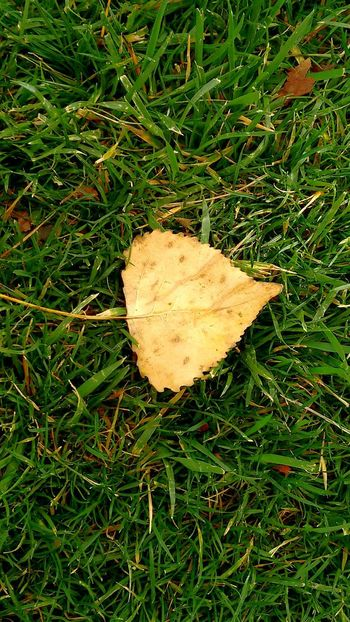 Greengrass Fall Leaves
