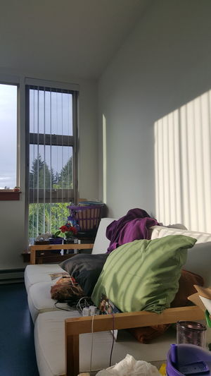 I love what the light was doing on the wall, echoing the blinds on the other window. Contrasts of colors and light. Indoors  Window Living Room Textile Domestic Life No People Tree Sunlight Day No Edit/no Filter Forest Sky Pine Tree Purple And Green