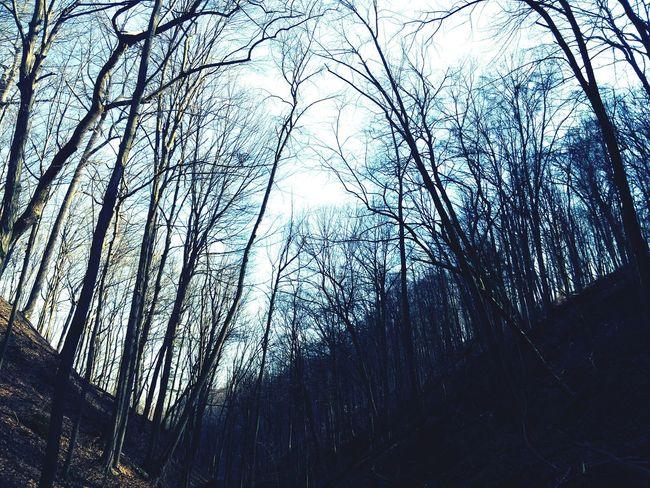 Lookinguphigh Trees Wilderness Hikingadventures Spring Natureexplorers
