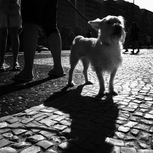 Dog on footpath