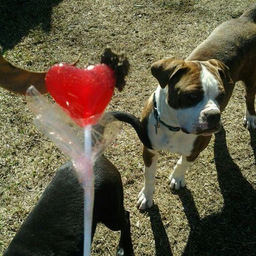 I know you have a crush on devil pop Dog Loves Devilpop