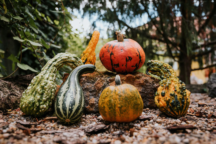 Pumpkins Kept On Rock Outdoors