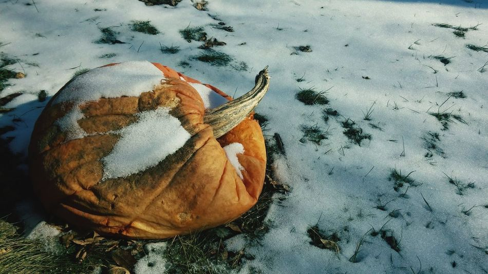 Orange Winter Snow Pumpkin White Grass Day No People Outdoors Close-up Nature