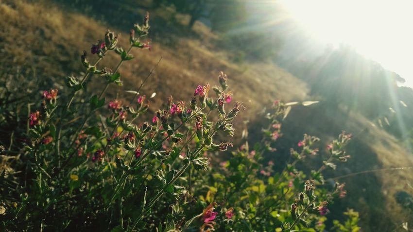 Sun Sun Rays ☉☉☉ ☉🌞🌞☉ ☉ ☉☉ Sun And Flower Pink Pink Flower 🌸 🌸 Good 🌺🌹🌷flower 🌸🌸🌷 ❤️❤️😍😍 ❤❤ Nature Beautiful Nature Nature Photography Nature Collection Flower Beautiful 🌸Nature🌸 🌷 Flowers 🌹 Beautiful Flowers 🌸 🌸 Nature 🌸flower🌸 ⚘🌷