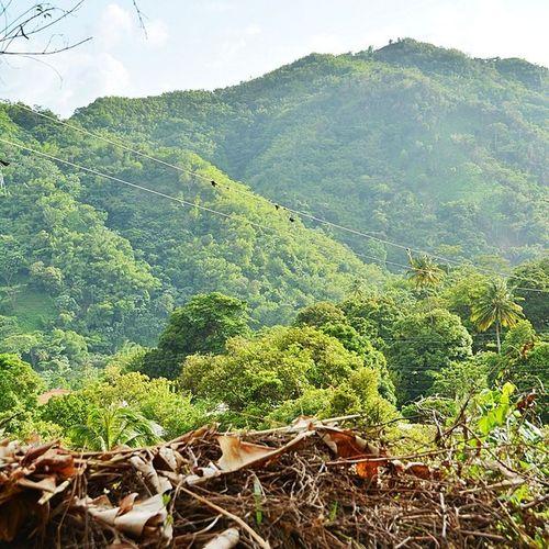 Ilivewhereyouvacation Caribbean_beautiful_landscapes Myhappyclicks Theblueislands Islandlivity Ig_caribbean Ig_unique_ Westindies_landscape Westindies_nature Wu_caribbean Instagram Instagood Mountain Nature_obsessed Bushments Grenada
