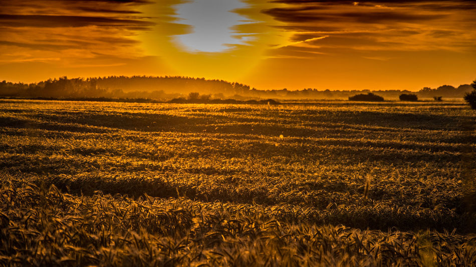 Agriculture Beauty In Nature Cloud - Sky Day Field Grass Kerber Landscape Nature No People Outdoors Photography Rural Scene Scenics Sky Sun Sunlight Sunset Sunset_collection Tranquil Scene Tranquility Tree Paint The Town Yellow Paint The Town Yellow Lost In The Landscape
