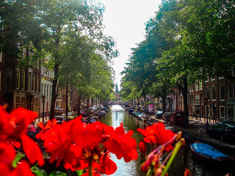 Amesterdao Amsterdam Amsterdam Beauty Amsterdam Canal Beauty In Nature Canal City Day Flower Fragility Green Color Growth Nature Netherlands No People Outdoors Pink Color Plant Red Sky Tranquility Tree Water