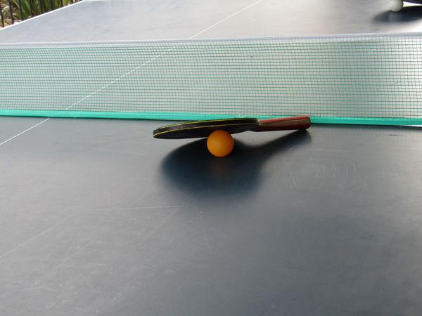 Ball Balles De Ping Pong Dead Serious Table Tennis My Passion Table Tennis Ping Pong Ping Pong Your Life Pingpong Playing Table Tennis Studio Shot Table Table Tennis Table Tennis Bats