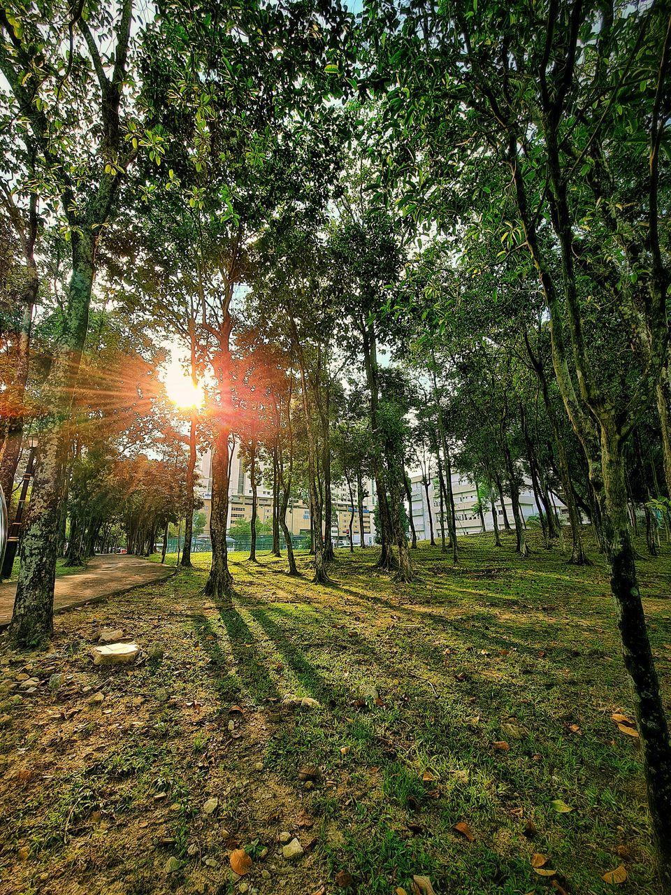 SUNLIGHT STREAMING THROUGH TREE