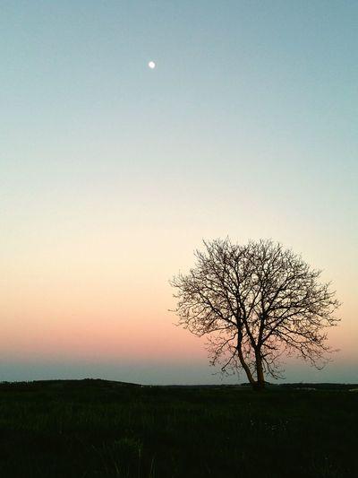Soir Lune Nature