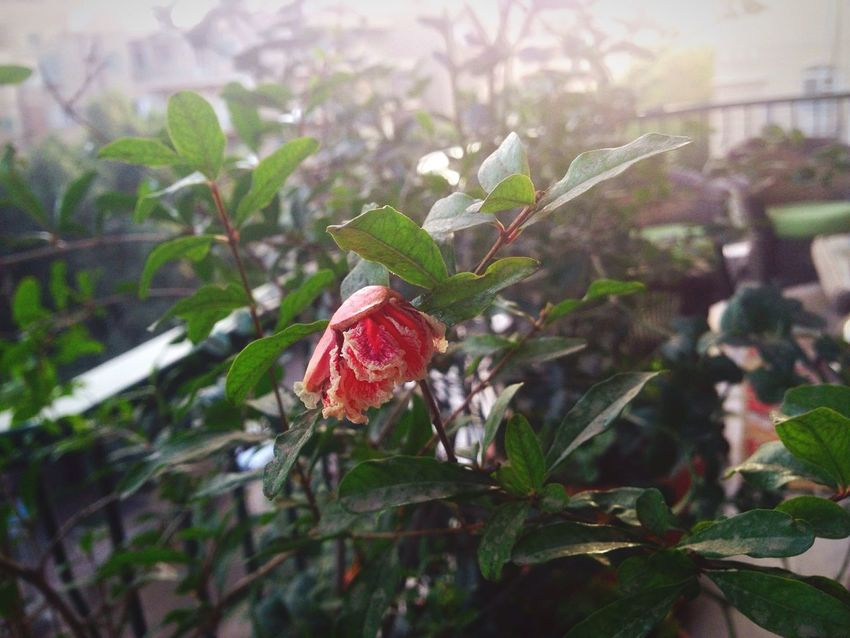 Hello World Taking Photos Check This Out Getting Inspired Taking Photos Experimental Getting Creative Trying New Things Macro Focus On Foreground Rose🌹 Rose - Flower Good Morning Exploring Check This Out Indoors  Green