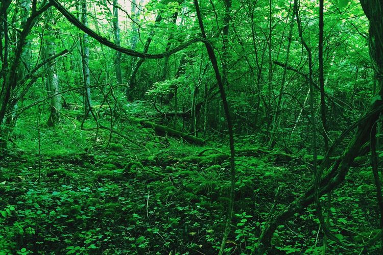 Forest Green Emerald Jungle Woods Fluo  Chlorophyll Green Green Green!  Green Inferno Trees Canopy