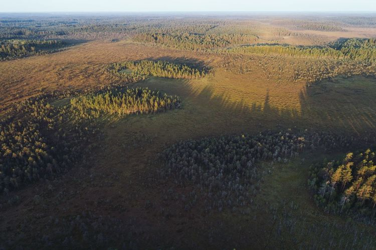 Bog and forest seen in high angle aerial view Morning Shadows & Lights No People Green Forest Bog Boreal Taiga Nature Landscape Beauty In Nature No People Tranquility Tranquil Scene Outdoors Scenics Aerial View