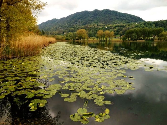 Lake View with Changing Weather , Peaceful Place , Floating Leaves Landscapes With WhiteWall