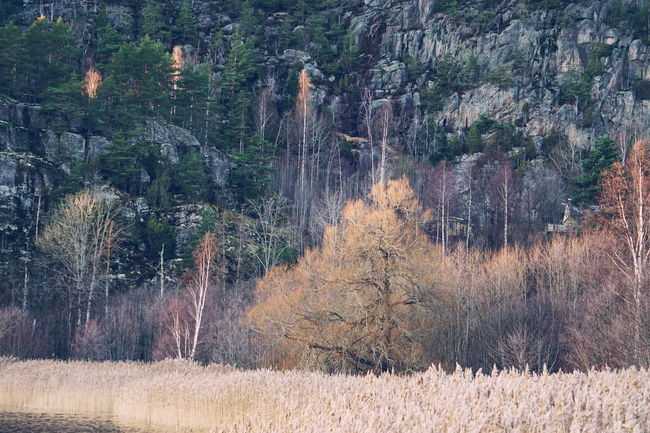 Ystehede, Halden Autumn Autumn Colors Fall Beauty Fall Colors Halden Nature Norway Sea Grass Ystehede Day Fall Fjord Forest Forest Fire Landscape Nature No People Norway Nature Outdoors Pine Tree Plant Scenery Scenics Tree Water