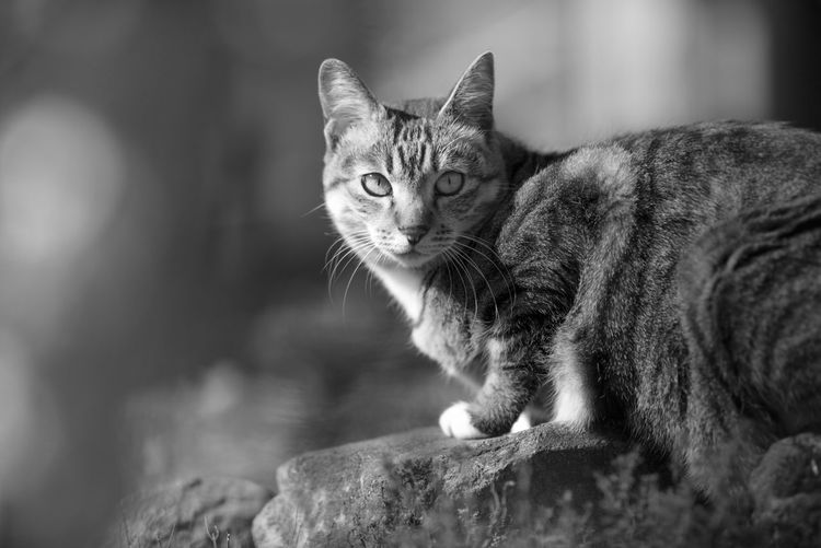 My tree cat really enjoy and love our garden and nature. Gardenbythebay Cat Portait Cat Lovers, Animals, Pets, Animal Themes Beautiful Cat Shot Cat In Garden Garden Explor Looking At Camera Monochrome Cat Monochrome Photography Nature Cats One Animal